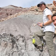 Examining a dinosaur outcrop in place!
